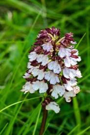 Orchideenexkursion - Volker Berg