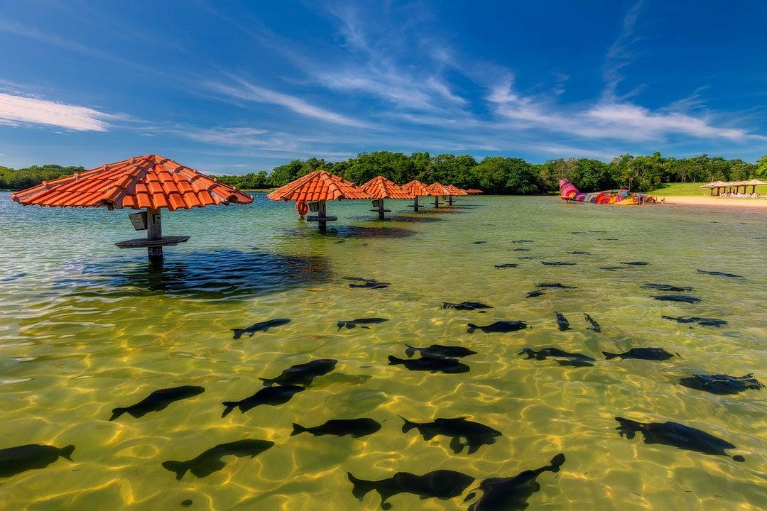 Fotoexplorer-Marcio-Cabral-Workshop-Bonito-Pantanal-004
