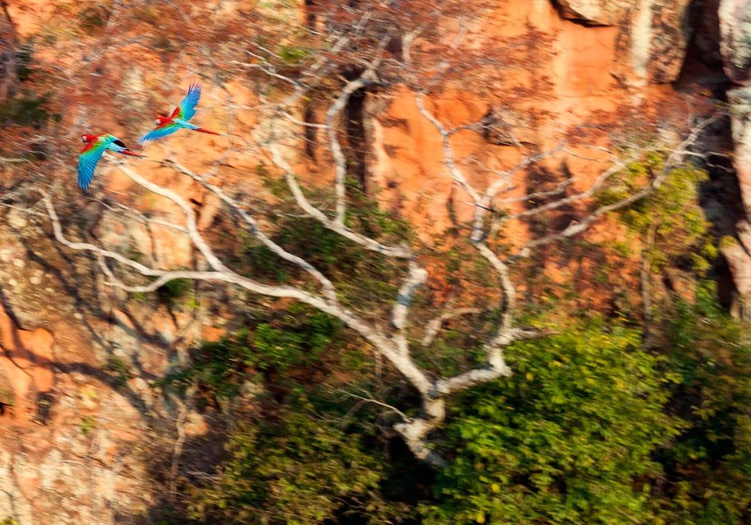 Fotoexplorer-Marcio-Cabral-Workshop-Bonito-Pantanal-015