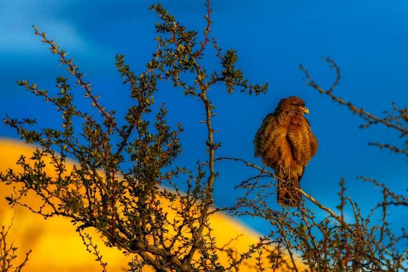 fotoexplorer_marcio_cabral_patagonia_new_01