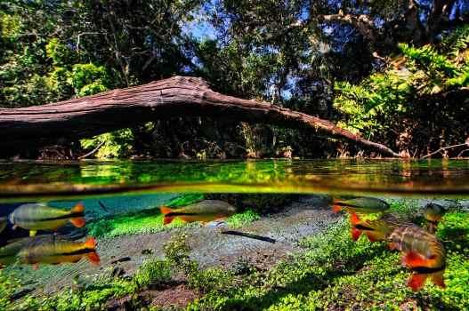 Fotoexplorer-Marcio-Cabral-BRA-MS-Bonito-Jardim-063