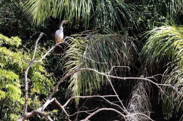 fotoexplorer_marcio_cabral_pantanal_01