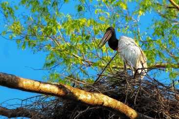 fotoexplorer_marcio_cabral_pantanal_04