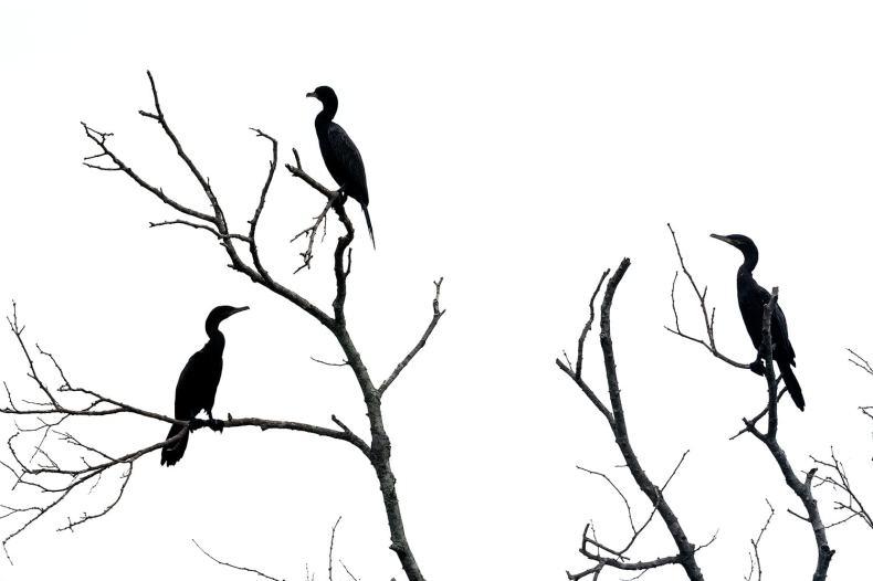 fotoexplorer_marcio_cabral_pantanal_20