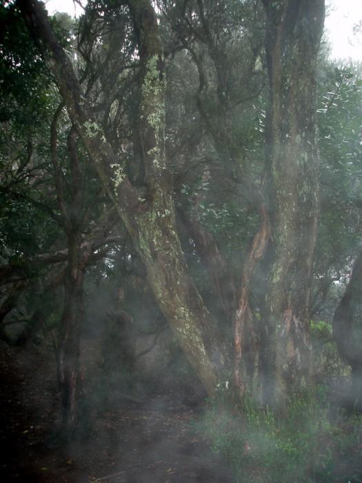 Cruz del Carmen - mit Blitz fotografiert