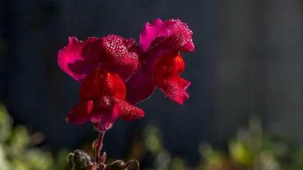 Garten Makros