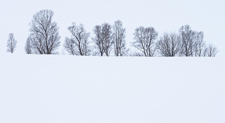 Pentekeningen in de sneeuw