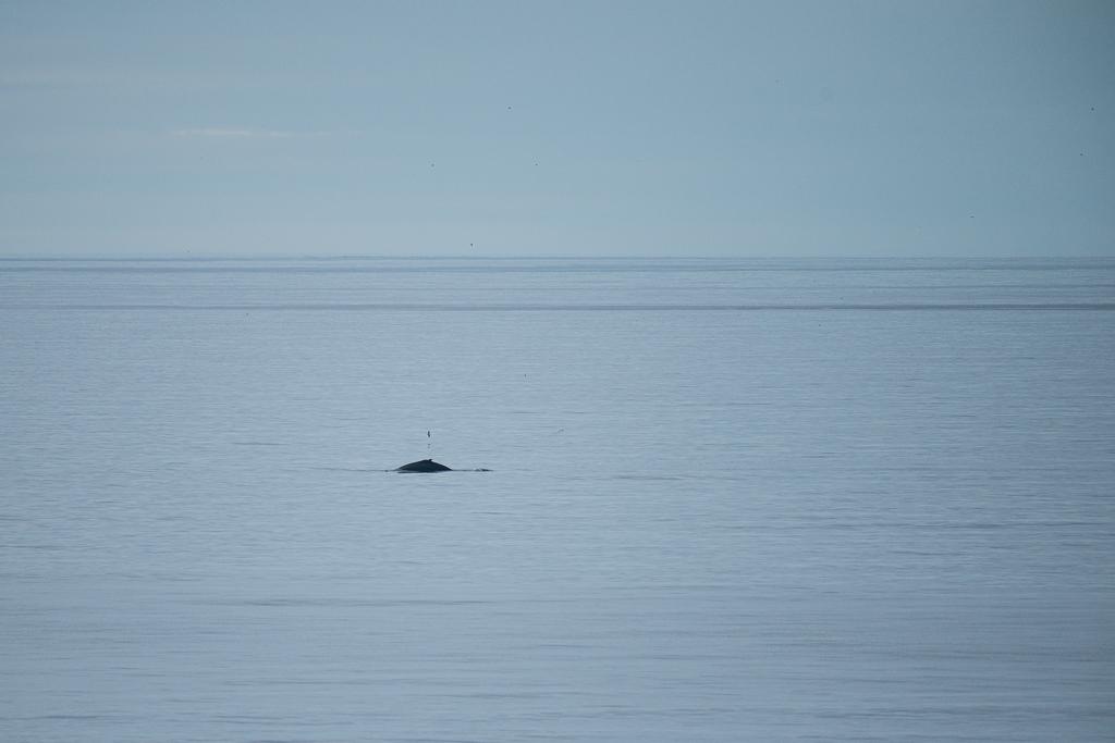 Walvissen vanaf de kant in IJsland