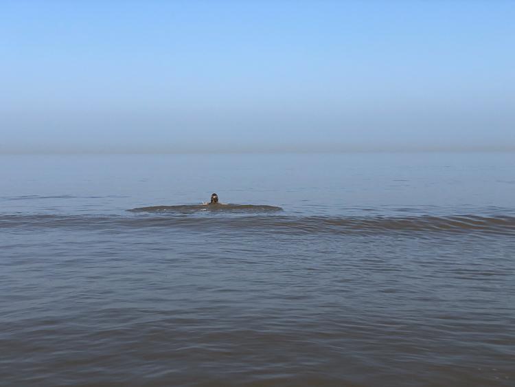 een verfrissende duik in zee
