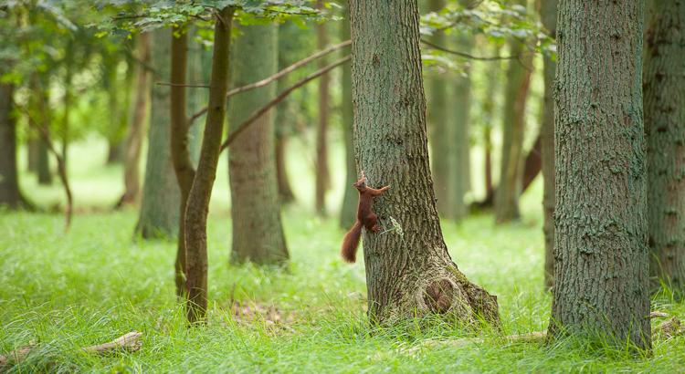 Wakker worden met een eekhoorn