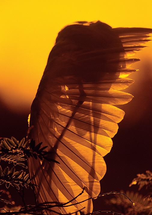 livro-de-fotografia-natureza-brasileira-019