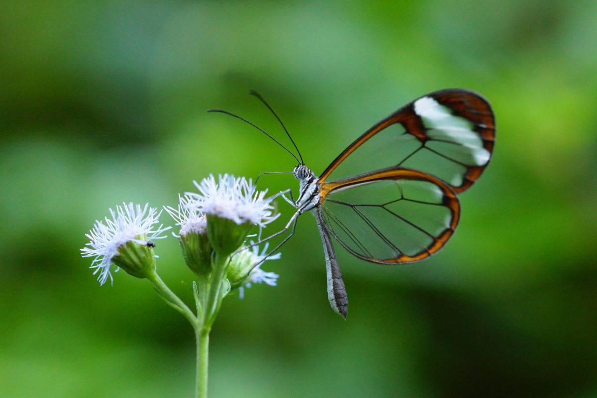 Vrolijk gekleurde vlinder in Costa Rica.