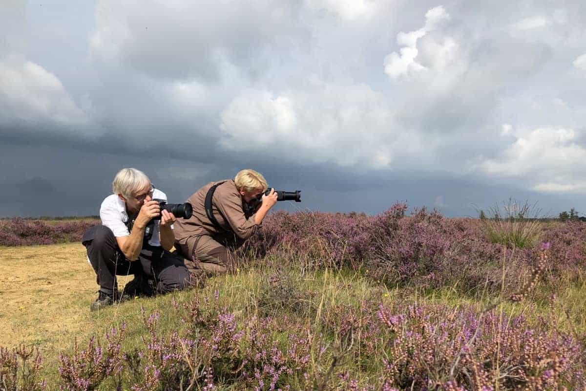 Deelnemers fotograferen de paarse heide tijdens fotoweekend Drenthe