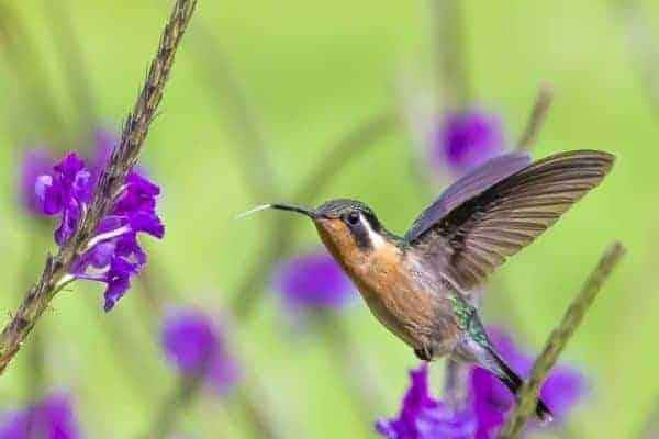 Fotoreis Costa Rica kolibri