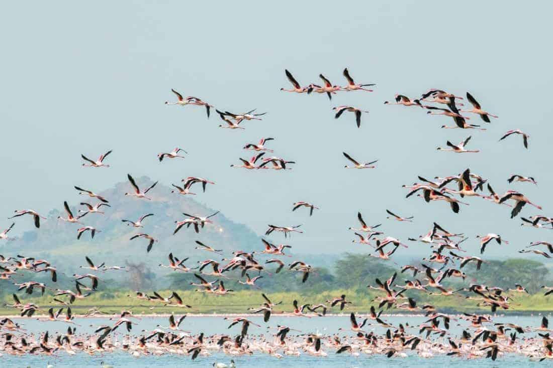 Fotoreis Kenia Lake Alementaita flamingos