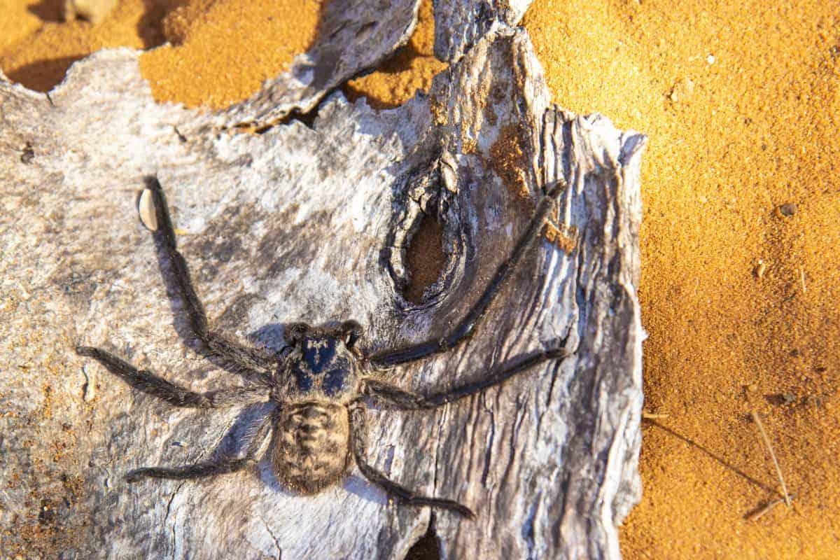 Fotoreis Madagaskar Spiny Forest spin