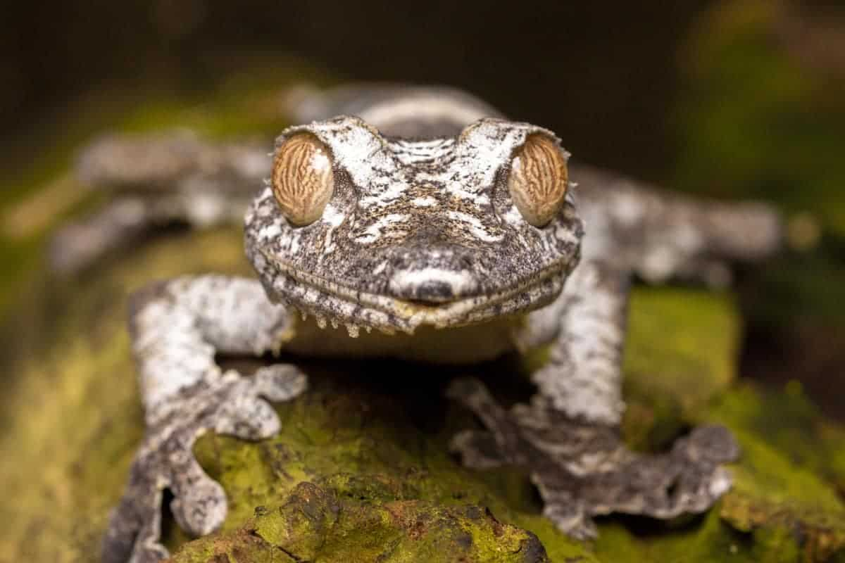 Fotoreis Madagaskar nachtdier