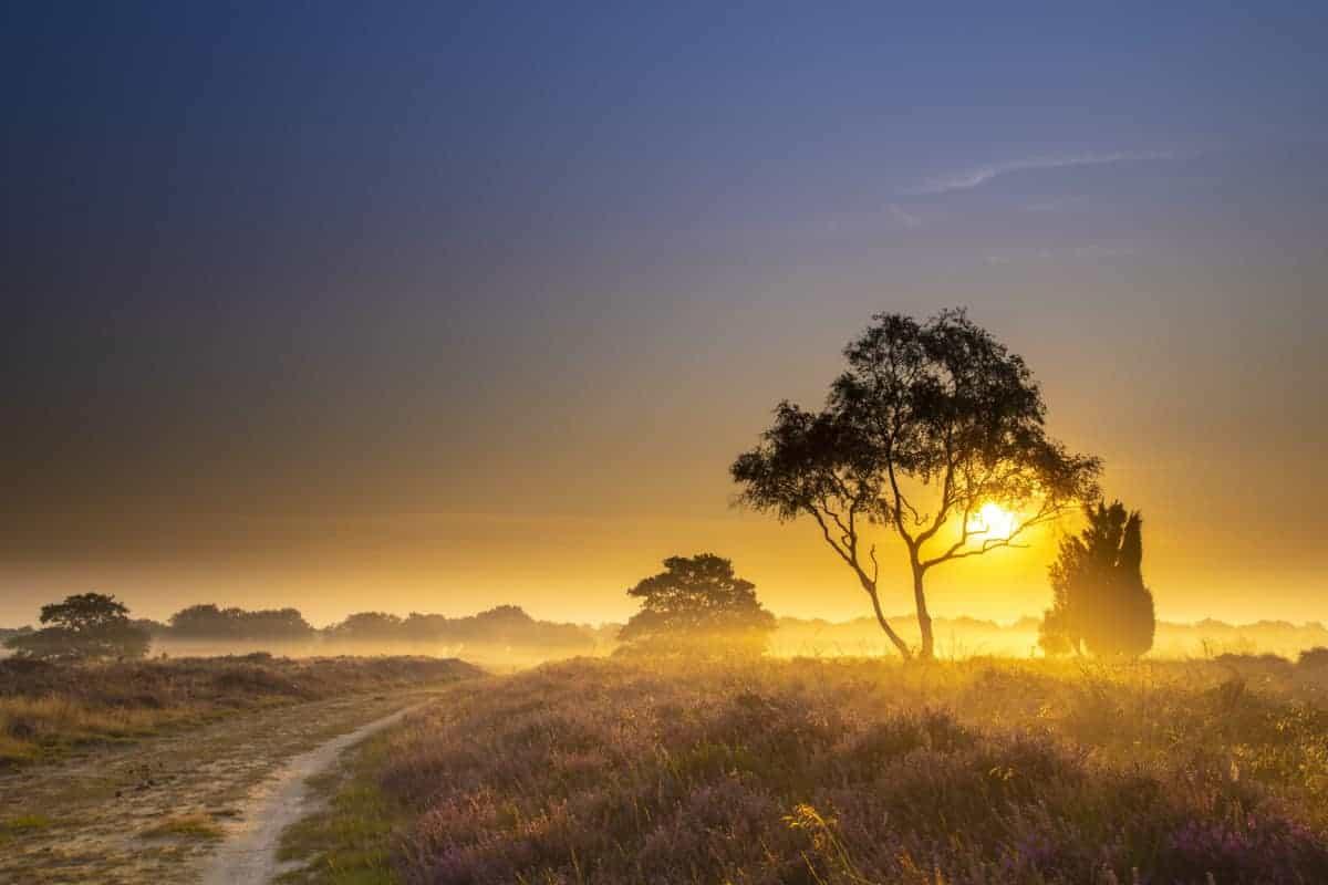 Fotoweekend Drenthe Balloerveld als de zon al op is   Fotografie-reizen - Fotoreizen