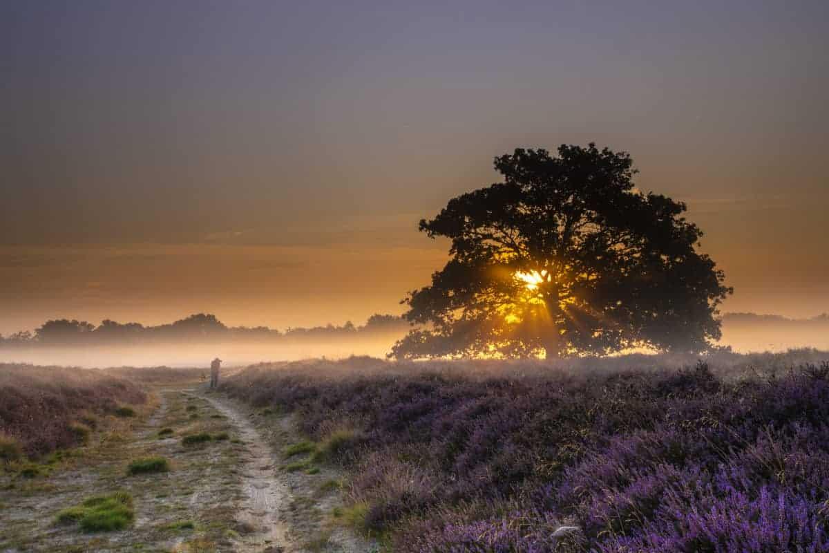 Fotoweekend Drenthe Balloerveld zon door de bomen