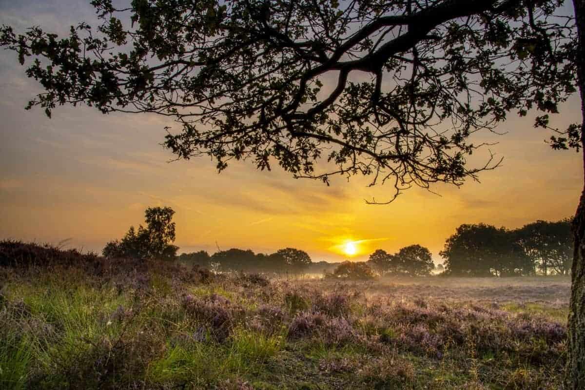 Fotoweekend Drenthe Gasterse Duinen | Fotografie-reizen - Fotoreizen