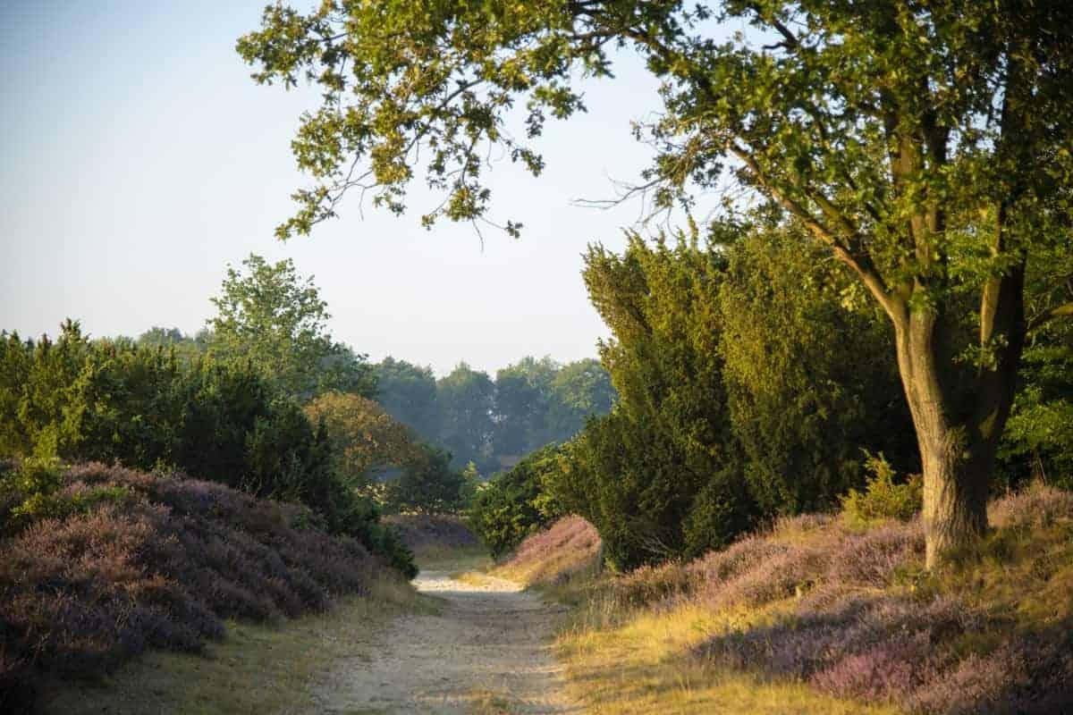 Fotoweekend Drenthe heidepaadje