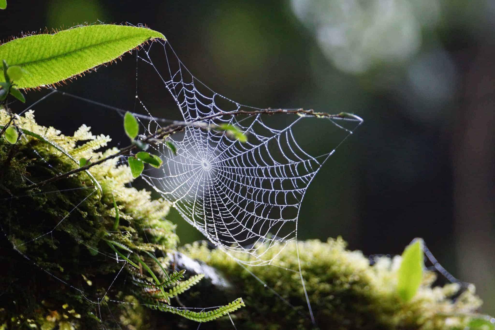 Spinneweb Costa Rica
