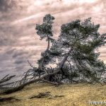 kootwijkerzand | Fotografie Arthur van Leeuwen