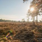 veluwe | Fotografie Arthur van Leeuwen