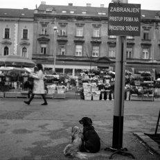 psima-zabranjeno