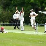 Cricket ACC-VOC
