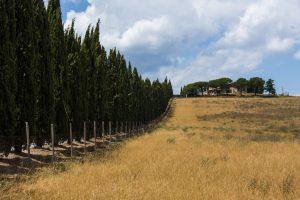 Hentet fra den nydelige landsbygda i Toscana, Italia. Bildets tittel, Maximus, stammer fra mine asosiasjoner til filmen «Gladiator» fra år 2000, hvor hovedpersonen Maximus sitt hjem ligger i lignende omgivelser.