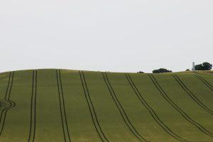 Grønne sommerenger på landsbygda i Danmark, utenfor Århus.
