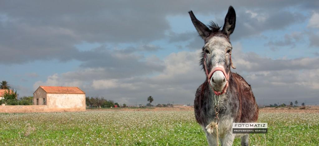 Ramon the donkey