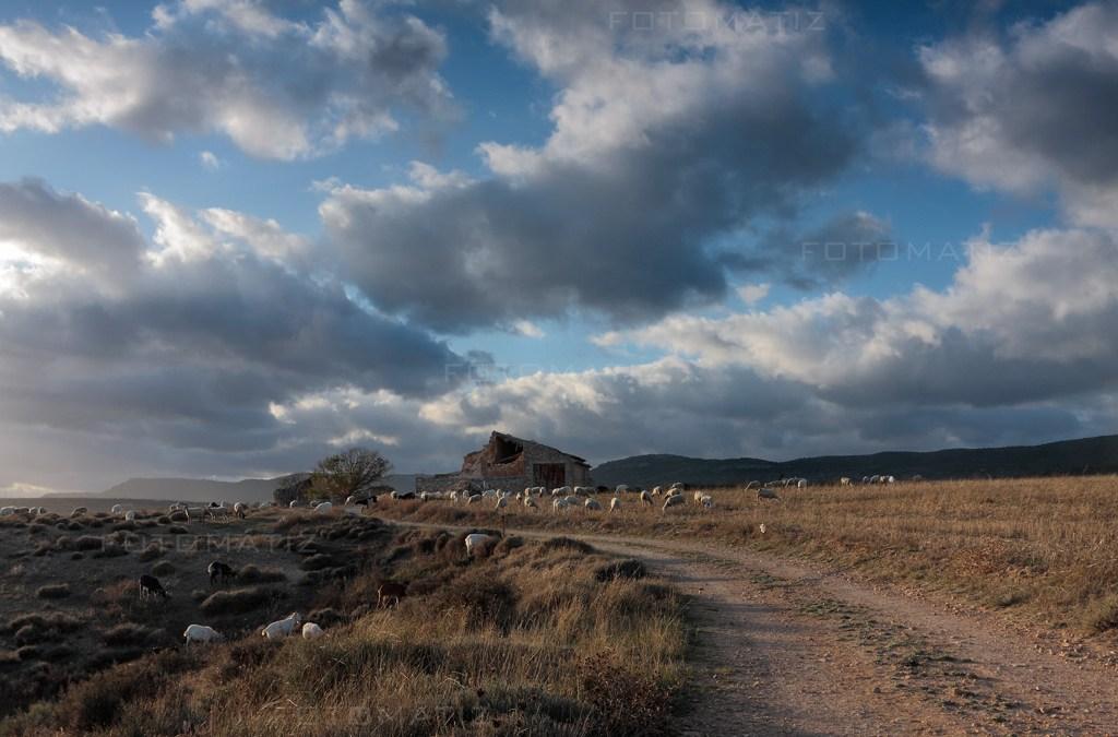 Fotografía Contando ovejas