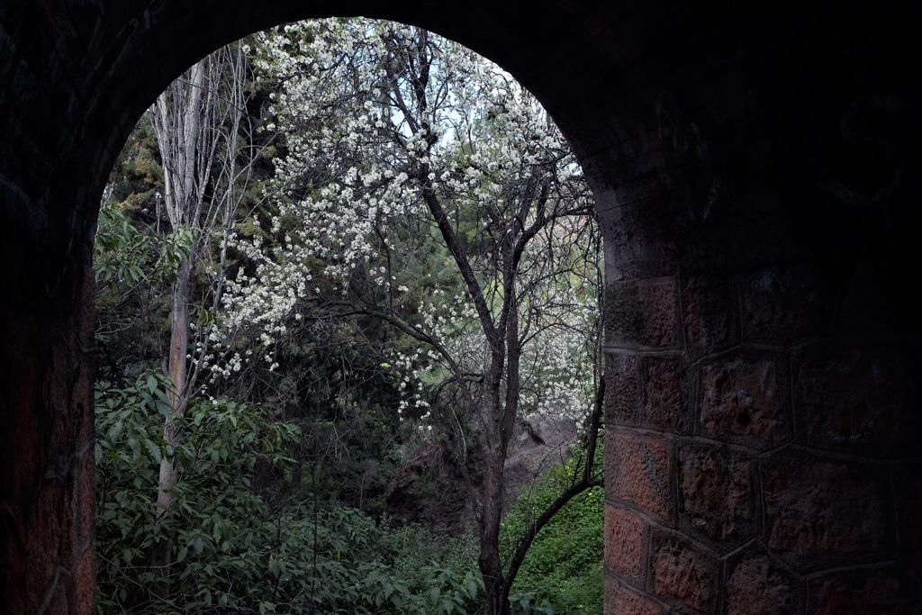 Floración de Almendros en la calle del Pino