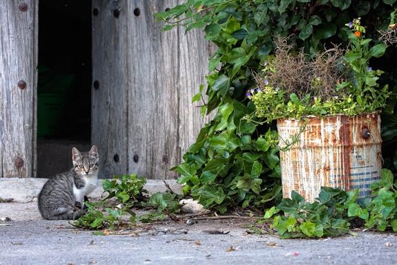 Fotografía de un retrato de gato en Bajil (Murcia)