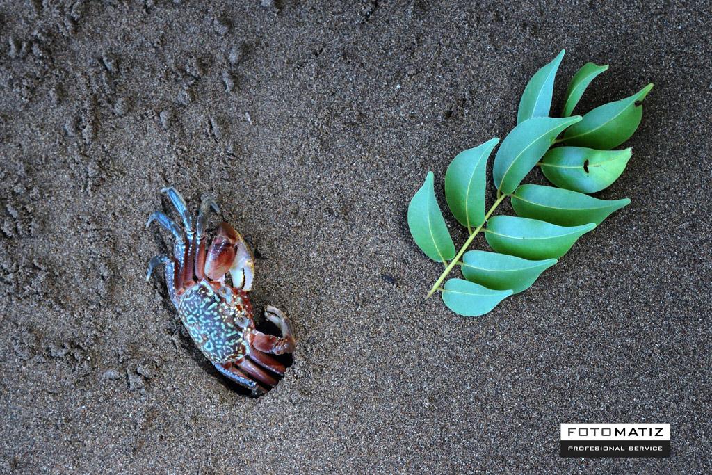 Cangrejo en la playa de Boca Chica