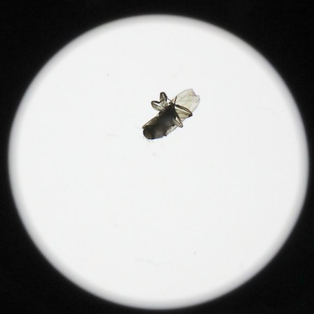 Canon EF 70-200 f2.8 IS USM II - La mosca intrusa