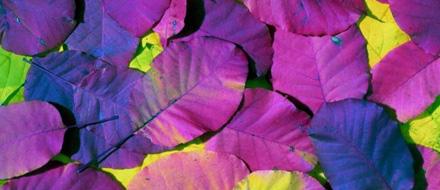 El color violeta