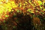 jesenna-nalada