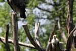 zoo-lesna-419