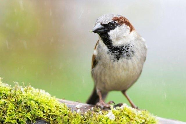 Kuş Fotoğrafları için Mükemmel Örnekler
