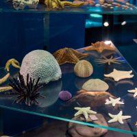 Stralsund - oceanarium