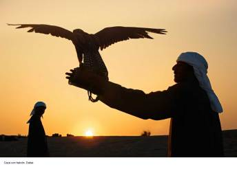 caza-halcon-desierto-dubai