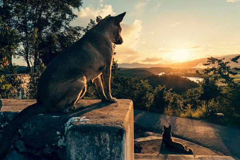 perro-sunset-dog-myanmar-puesta-de-sol