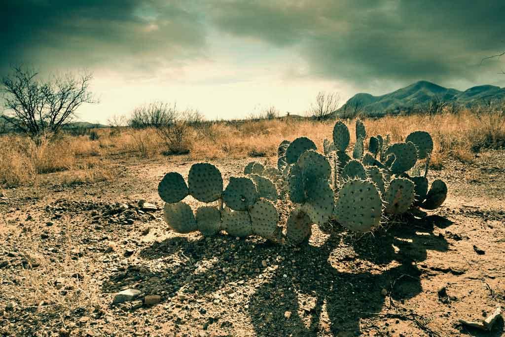 mexico-desierto-cactus