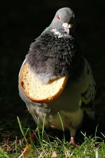 Chlebak