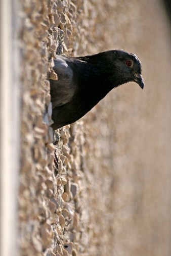 Strażnik gniazda