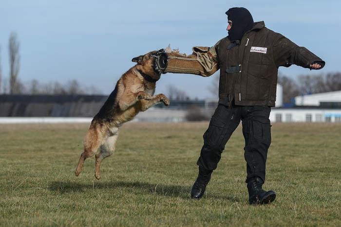 Policja Bielsko-Biała- trening psa