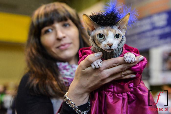 Fotoreportaż z wystawy kotów